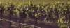 winelands-header