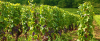 winelands-updated-header